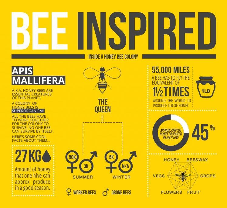 infographic-design-748px