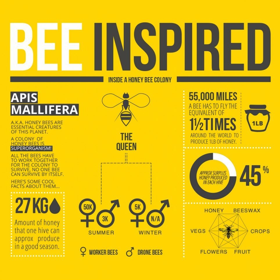 Infographic design by Munch Studio